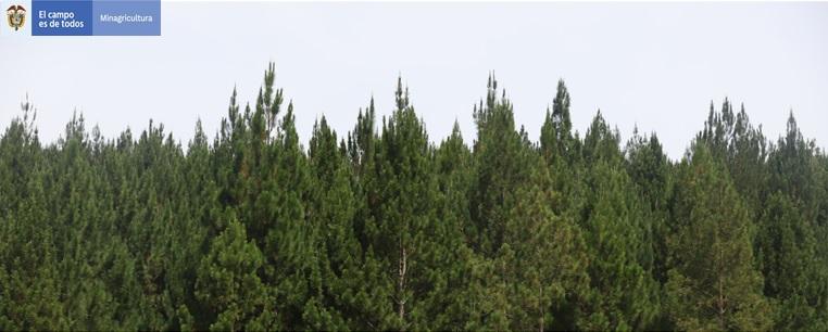 PREDIOS PARA REALIZAR PLANTACIONES FORESTALES COMERCIAL