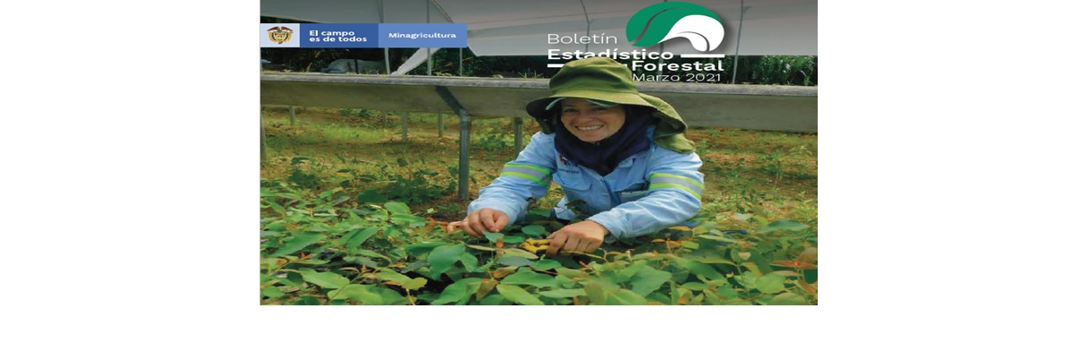 Boletín Estadistico Forestal